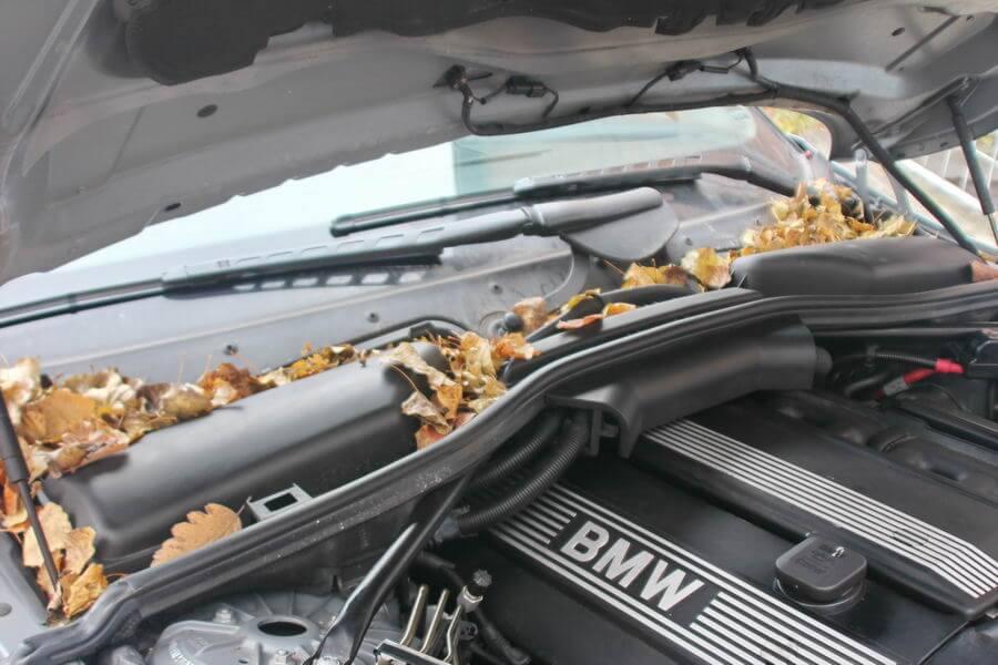 Laub an der Spritzwand - Gefahr für viele Autoteile